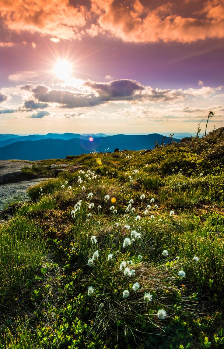 Eriophorum vaginatum glowing in the evening sun atop Wright Peak Adirondack Mountains New York [OC][4376x6811]