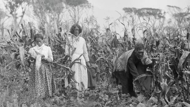 Māorihorticulture: growing crops the traditional way
