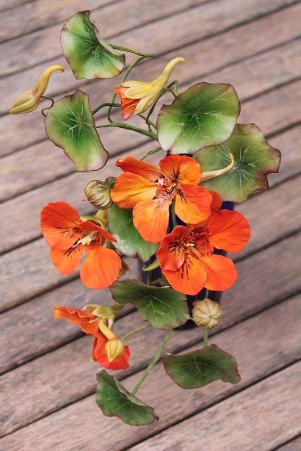 {Fabulous tangerine Nasturtiums by  Elena Ujshag}