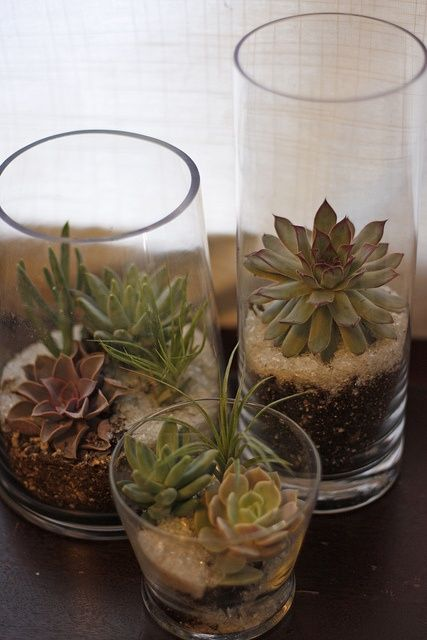 Best images about terrariums and succulents on