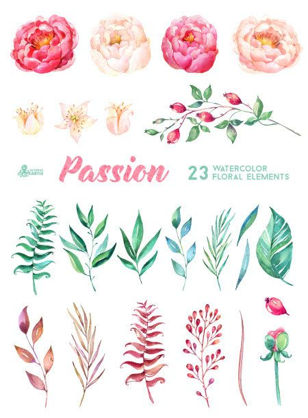 Passion 23 Watercolor Floral Elements hand painted by OctopusArtis