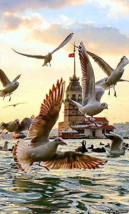#istanbul #martı #kızkulesi