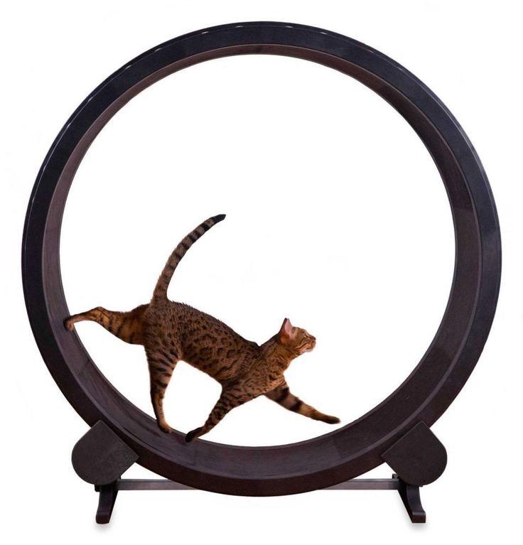 Cat Exercise Wheel Toy Play Kitty Running  Pet Treadmill Indoor Tread Wheel  #Unbranded