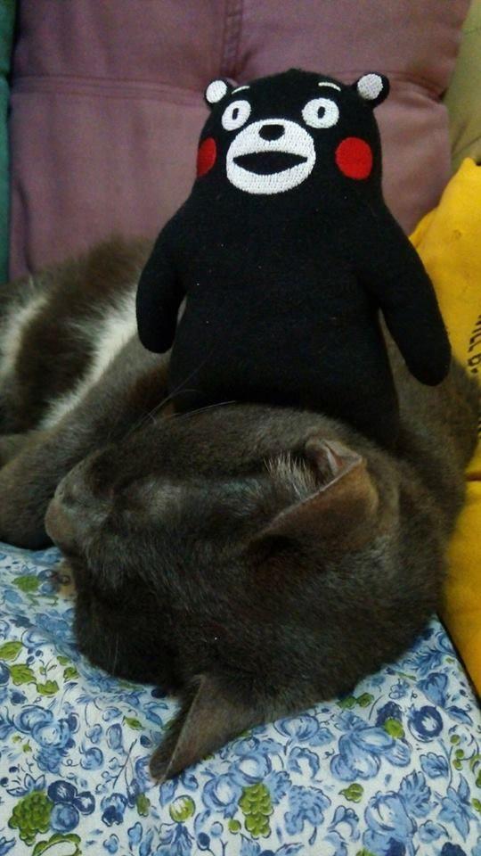 Kumamon and the cat