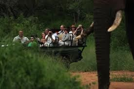 Explore the African bush on game drive vehicles with experienced guides