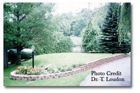 landscaping septic mounds - Google Search