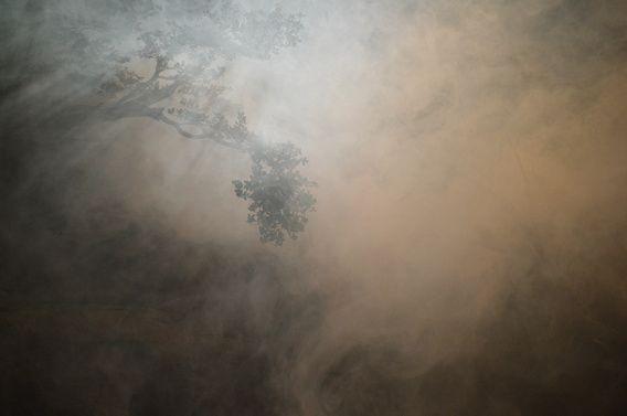 Nieuw in mijn Werk aan de Muur shop: Boomtakken in de rook met een mooie lichtval