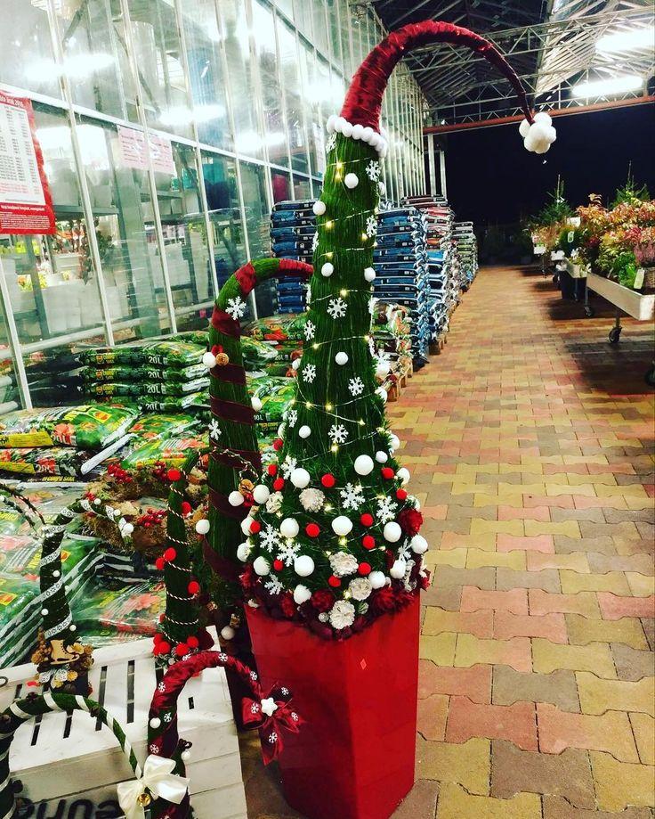#grincs #grincsfa #otthon #lakberendezés #dekoráció #kert #kertészet #oaziskerteszet #instahunig #mik #virág #növény #igershungary #fotoklub #iponthu #iphonehungary #magyarig #szifoncom #mik_viragok #insta_viragok  #karácsony #karacsony #karácsonyfa #karacsonyfa #karacsonyfadisz #karácsonyfadísz #unnepihangulat