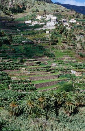 Terraced farming in Santa Cruz de la Palma ~ La Palma, Canary Islands