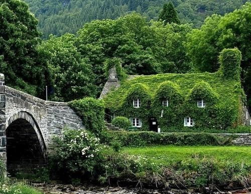 There is nothing I love more than ivy covered walls, and in this case, roofs!