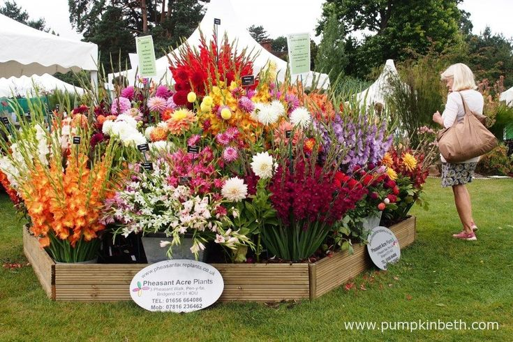 A fantastic display of Gladioli and Dahlias from Pheasant Acre Plants.