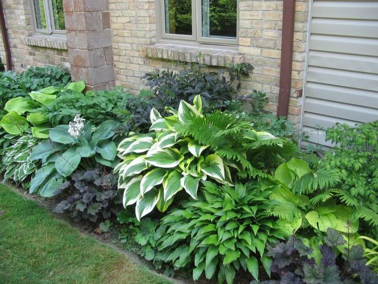 border of hostas and ferns