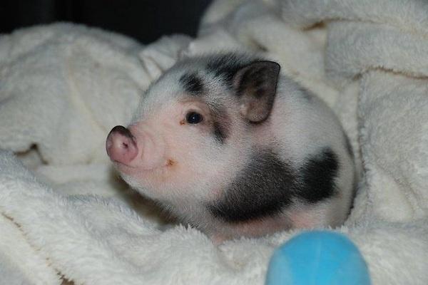The Cutest Pig!  He looks like a piggy bank.