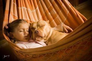 "Pitbulls used to be called ""The Nanny Dog"" because they are so devoted to their humans..."