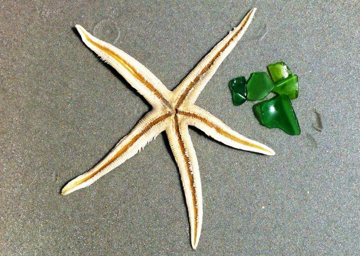 Starfish & Sea Glass