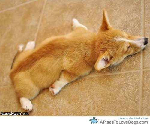 this sleeping position is awesome~