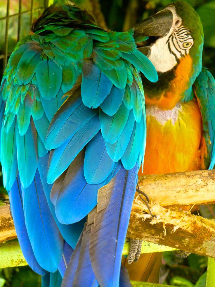 Parrots Botanical Garden Deshaies, Guadeloupe
