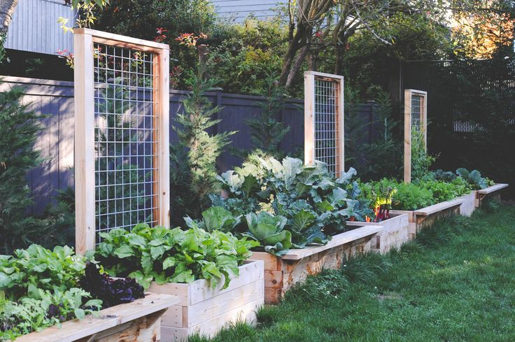 Long Raised Beds With Built In Trellis By Seattle Urban