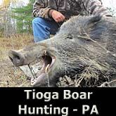 Hog - Wild Boar Hunting trips from California to Florida!