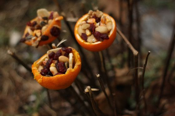 orange cup bird feeder - happy hooligans - Mix nuts/berries/seeds/grains with peanut butter and stake with a stick in the yard for birds and squirrels.