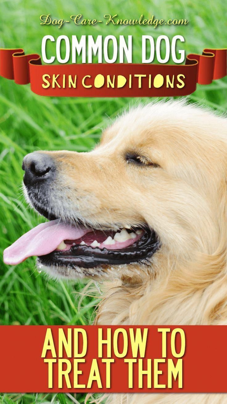 Here S The Most Common Dog Skin Conditions And How To Treat Each
