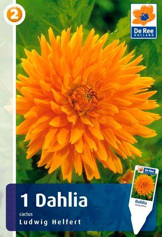 Dahlia-Ludwig-Helfert.jpg (327×478)