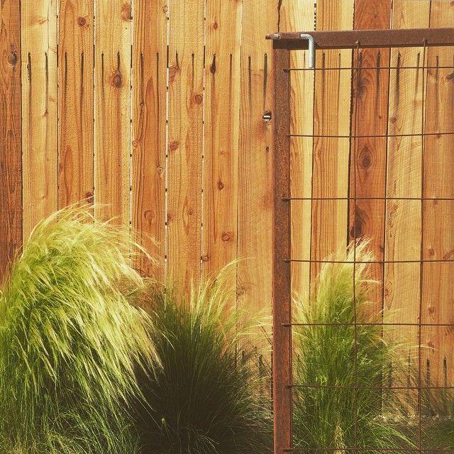 "Satterfield on Instagram ""feathergrass explosions"
