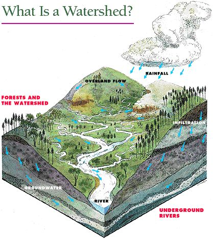 "What is a Watershed?  A watershed is an area containing all the land that brings water to a lake. Streams, creeks and ditches all bring water to the lake, but so does excess rainwater flowing over the land (known as ""runoff"") and water that percolates through the soil (""groundwater""). No matter where you are, you are in a watershed.    A healthy lake starts upstream:  Clean lake waters flow from healthy landscapes!"
