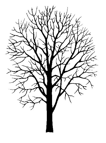 Printable Tree Pattern With Branches North American