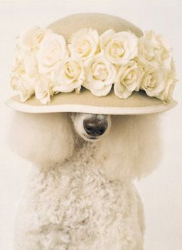 ready to go to a wedding I am a bridesmade
