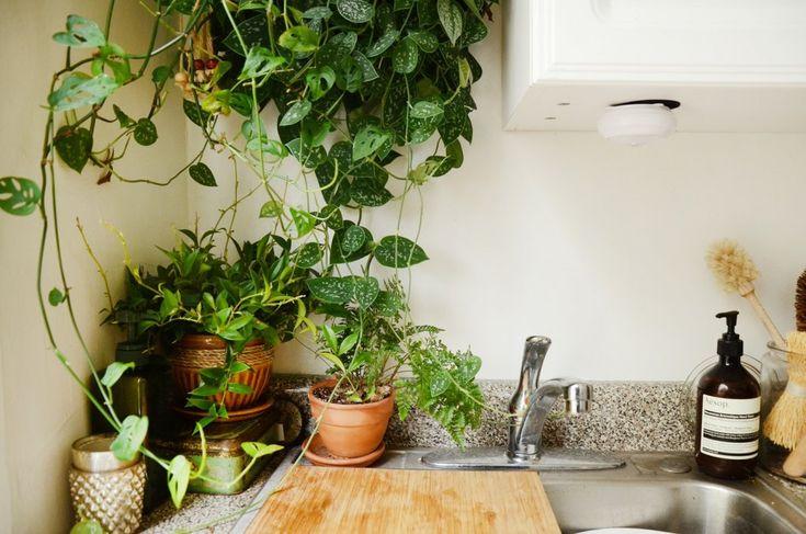 Лучшие растения для небольшой кухни. Список названий с фото - Ботаничка.ru