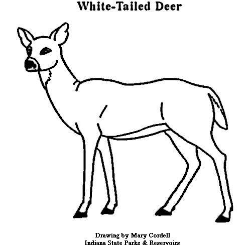 key deer coloring pages John