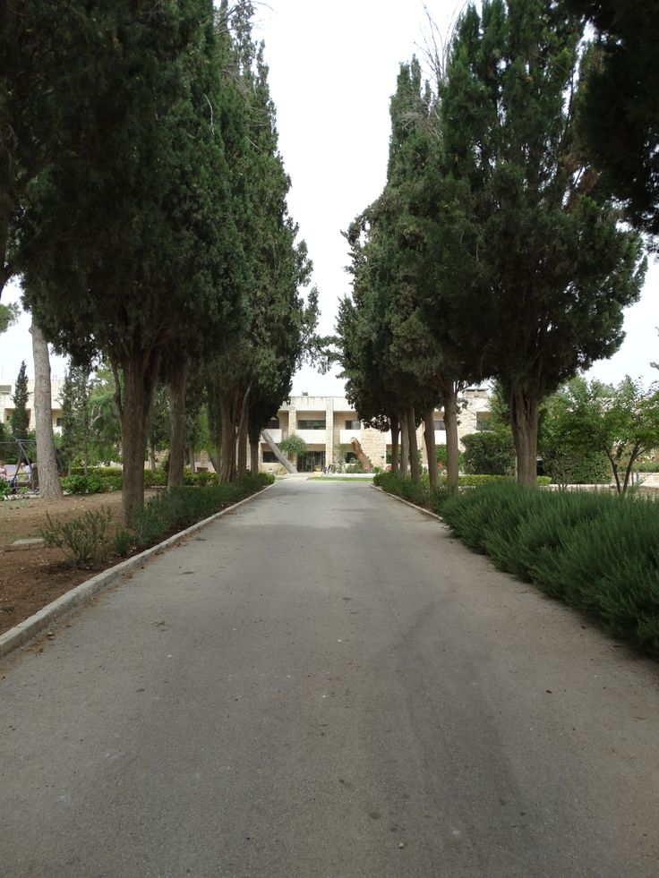 The courtyard road of Tantur.  Some of the trees were planted by the original tenants of the land.