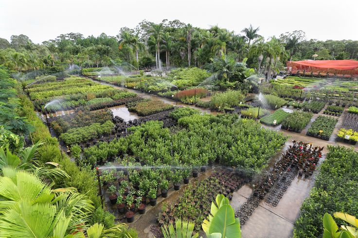 ePlants Trade Nurseries Supply of small to advanced natives and exotic plants on Queensland's Sunshine Coast