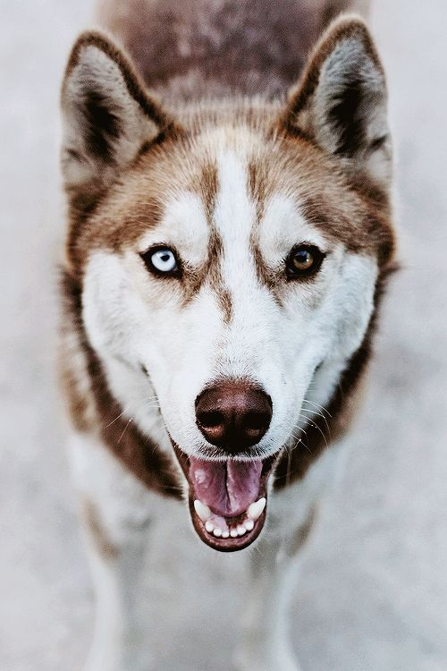 This Is My Dream Canine Companion Eyes Dogs Animals