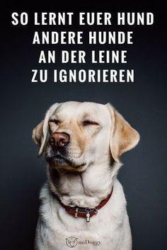 Wie lernt mein Hund, andere Hunde zu ignorieren?