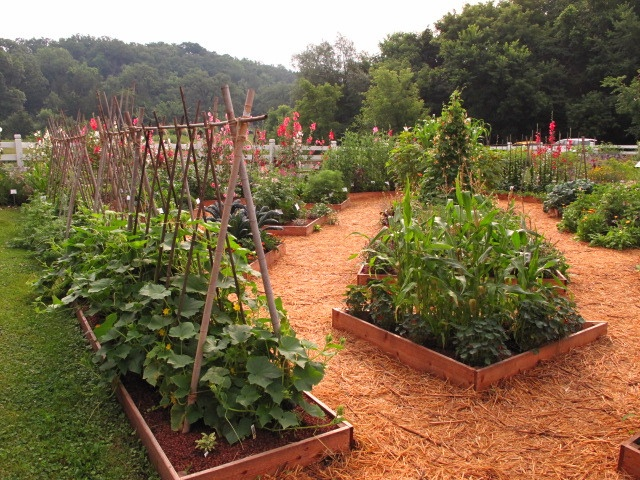 seed savers heritage farm in decorah iowa using colored wood chips for ground cover in
