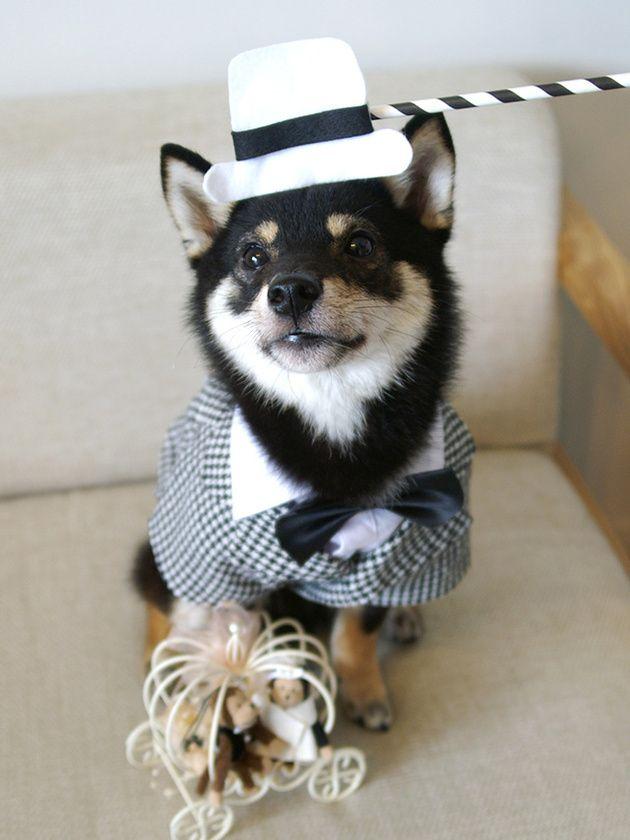 千鳥格子柄スーツのおしゃれグルームボーイ まめ丸(犬・♂)  愛犬・愛猫と楽しむウエディング・スタイル | ウエディング | 25ans(ヴァンサンカン)オンライン