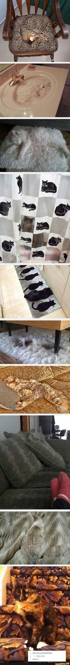 Los gatos si que saben de camuflaje 7u7)r