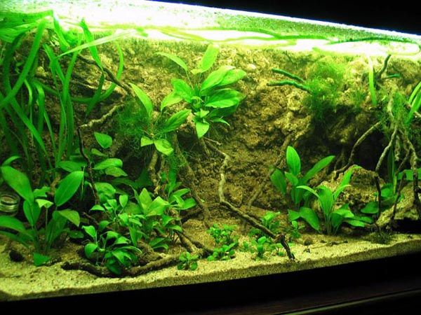 DIY 3D Aquarium Background Inspiration. This African River Biotope Is Unreal. Inspiration: Could Use This Method (Or Similar) To Create A Relatively Steep Sloped Riverbank In One Corner Of A Long Polypterus Tank