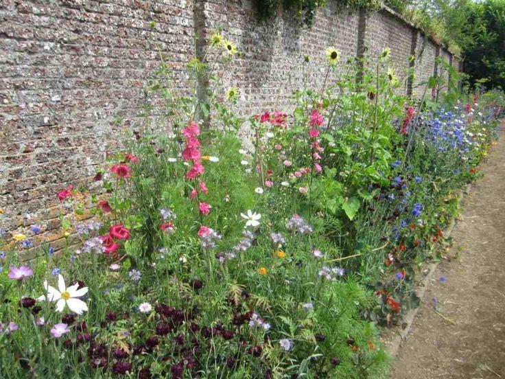 Een strook langs een muur is heel geschikt voor wilde zaaibloemen. Deze foto komt van de Port Eliot gardens in Cornwall. De bloemen zijn in de eerste week van april gezaaid. De roze Ridderspoor, Delphinium, is prachtig!