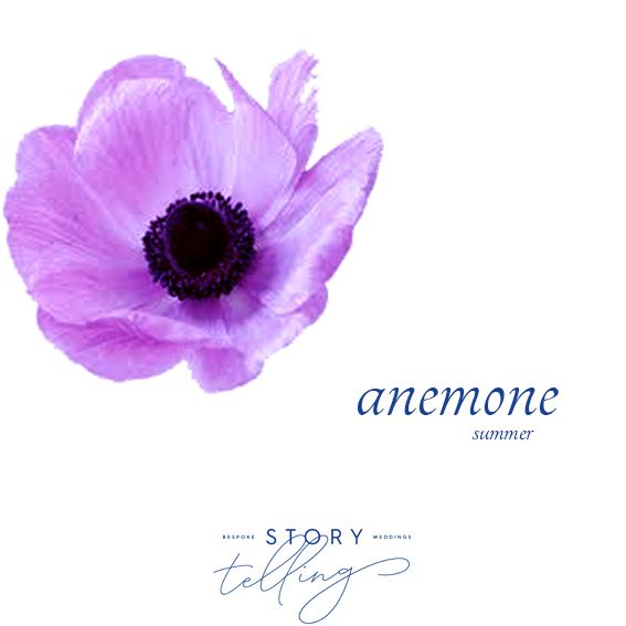 Anemone Flower In 2020 Anemone Flower Flower Close Up Flower Quotes