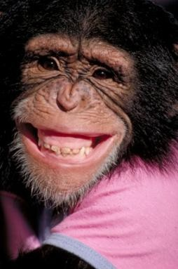 cheeeeezzz: Animals Smiling, Computers, Face, Monkeys, Ape, Pet, Cheese, Things, Animal Smiles