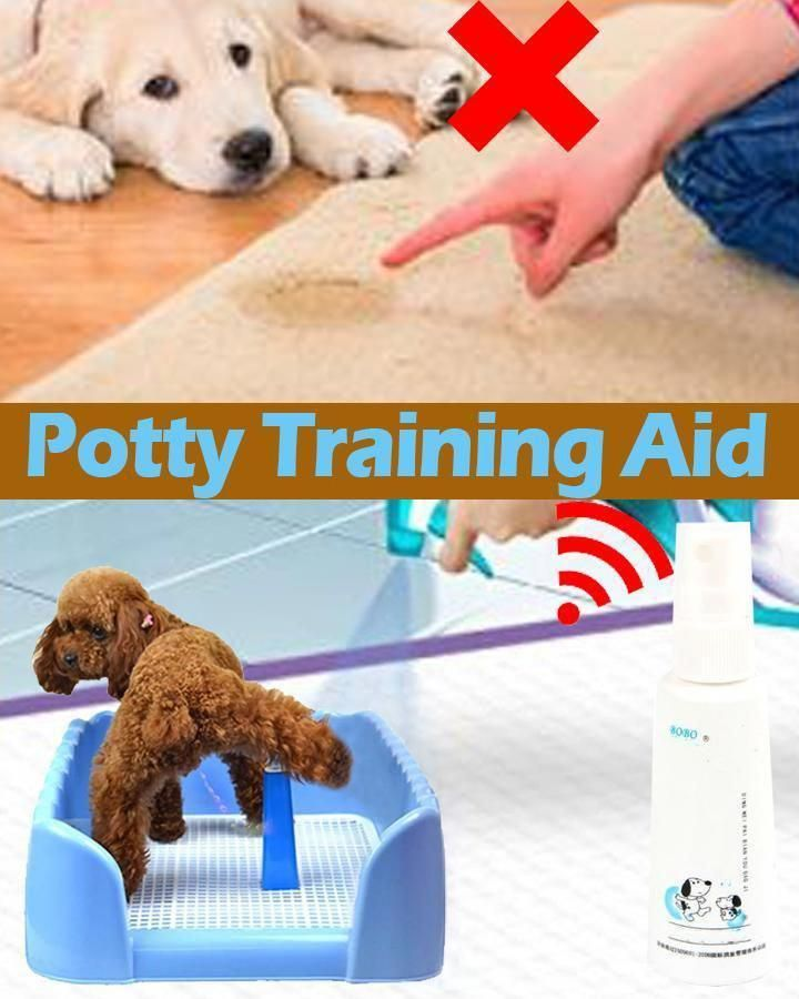 Every House Family Pet Dog Ought To Know And Be Able To Follow At