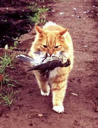 Cats In Action Gallery | http://rachelhaygoodnaturalcare.com/ #cats #cathunting