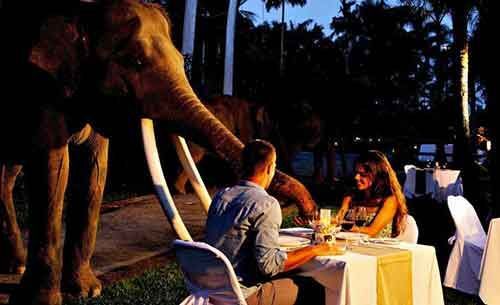 Bali Zoo Park Package Dinner with Elephant