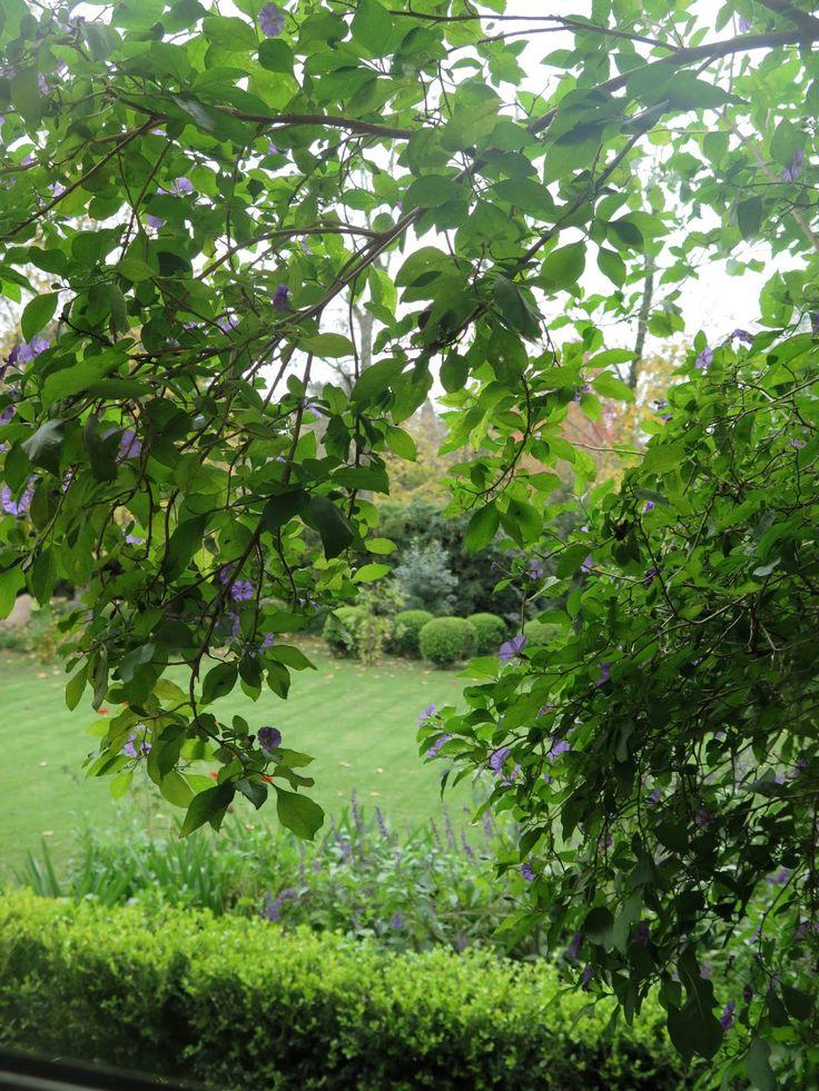 Mis queridos amigos jardineros, finalmente parece que el otoño va llegando a Buenos Aires. Esta es una de mis estaciones preferidas, no s...