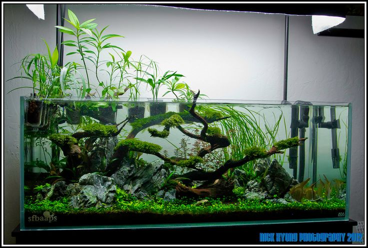 Ada tank for Ada fish tank