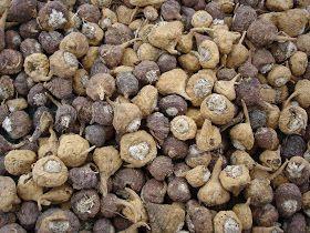 La  maca andina  es una poderosa raíz originaria de Perú, utilizada como alimento y a la vez como remedio natural desde los tiempos de los I...