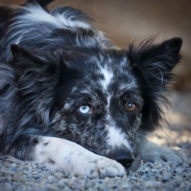 Blue one  #dog #dogs #insta_dogs #dogsofinstagram #dogs_of_day #dogs_unity